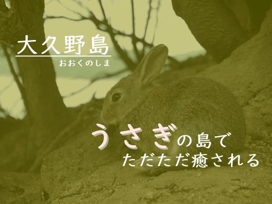 大久野島うさぎたち
